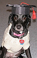 Dog training graduate in T shirt